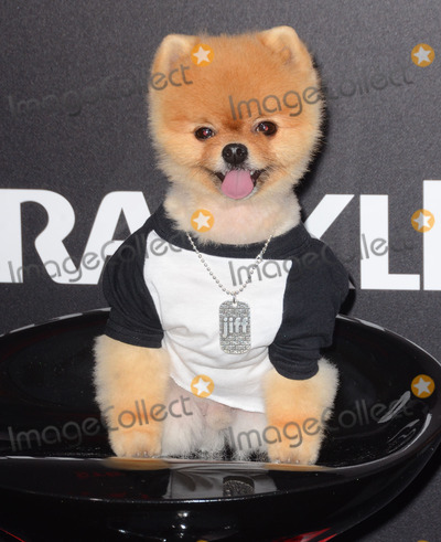 "Jiff Pom, Kim Novak Photo - 11 March 2015 - Los Angeles, California - Jiff Pom.  Arrivals for Crackle's world premiere original feature film ""Dead Rising: Watchtower"" held at the Kim Novak Theater at Sony Pictures Studios. Photo Credit: Birdie Thompson/AdMedia"