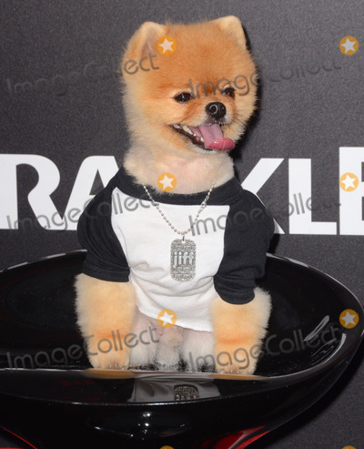 """Jiff Pom, Kim Novak Photo - 11 March 2015 - Los Angeles, California - Jiff Pom.  Arrivals for Crackle's world premiere original feature film """"Dead Rising: Watchtower"""" held at the Kim Novak Theater at Sony Pictures Studios. Photo Credit: Birdie Thompson/AdMedia"""