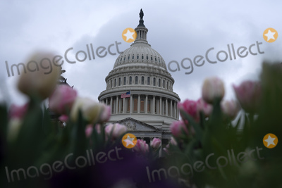 The Unit Photo - The United States Capitol is seen in Washington D.C., U.S. on Wednesday, March 25, 2020.  The Senate is set to vote on a Coronavirus Stimulus Package after working late into the night on Tuesday to finalize a two trillion dollar deal.  Credit: Stefani Reynolds / CNP/AdMedia