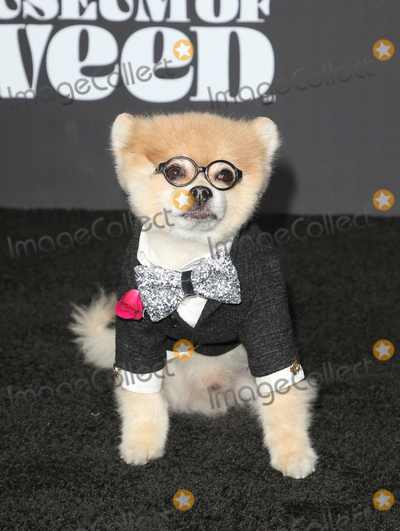 Photo - 1 August 2019 - Los Angeles, California - Bentley The Pom. Weedmaps Museum of Weed Exclusive Preview Celebration held at Weedmaps Museum Pop Up. Photo Credit: FSadou/AdMedia