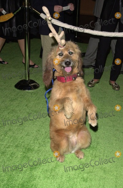 The Grinch Who Stole Christmas Dog.Photos And Pictures Kelly The Dog At The Premiere Of