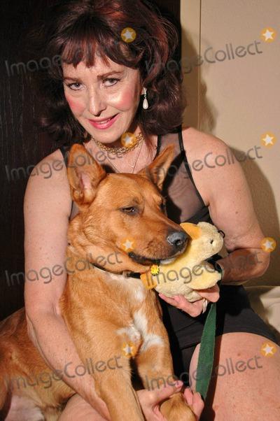 Private Dog Adoption Los Angeles