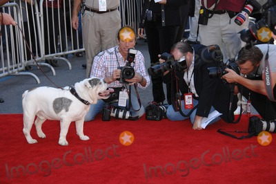 "The Game Photo - Tubbs the dog at the world premiere of his new movie ""The Game Plan"" at the El Capitan Theatre, Hollywood.
