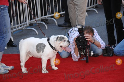 """The Game Photo - Tubbs the dog at the world premiere of his new movie """"The Game Plan"""" at the El Capitan Theatre, Hollywood.September 23, 2007  Los Angeles, CAPicture: Paul Smith / Featureflash"""