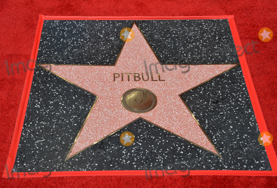 Pitbull Photo - LOS ANGELES, CA. July 15, 2016: Singer Pitbull's star on Hollywood Blvd where Pitbull was honored with the 2,584th star on the Hollywood Walk of Fame.Picture: Paul Smith / Featureflash