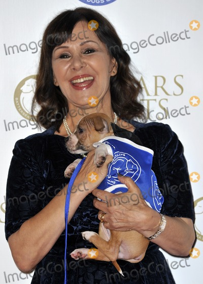 Arlene Phillips, Gary Mitchell, Arlene Phillip Photo - London, England. Arlene Phillips at the annual Collars and Coats Gala Ball in aid of Battersea Dogs & Cats home at Battersea Evolution on November 7, 2013 in London, England.