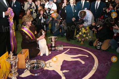 Photos And Pictures The 131st Annual Westminster Dog Show Madison Square Garden Nyc 02 13